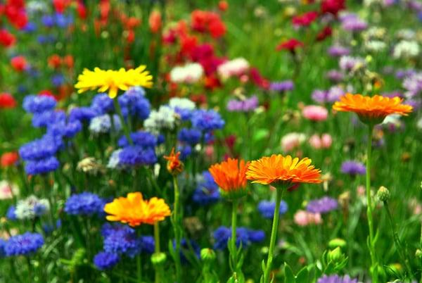 flower-background